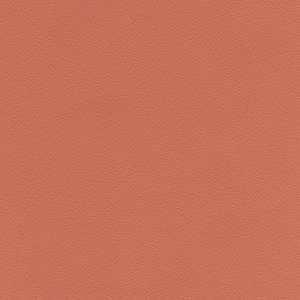 65078W Lambourn Begonia
